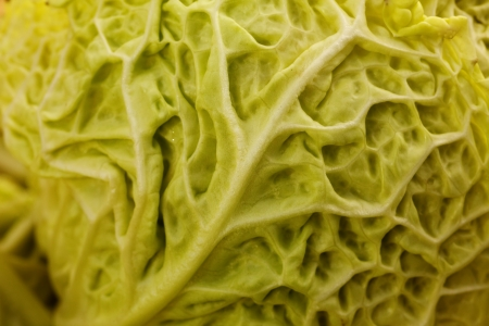 Close up of a crinkled leaf green savoy cabbage