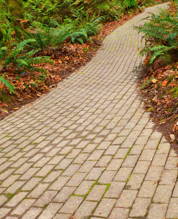 Winding brick path through a fern garden Banco de Imagens - 18737335