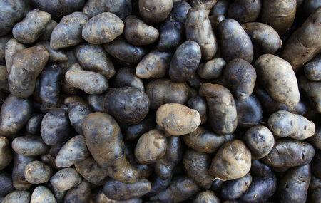 Pile of Swedish Black Potatoes Potatoes at the Farmers Market 写真素材