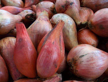 Pile of Shallots at the farmers market Banco de Imagens - 29655342