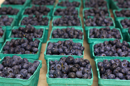 Rows of green blueberry baskets at the Farmers market