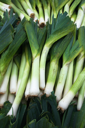 Rows and Piles of Green and white Leeks at the farmers market