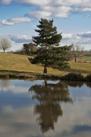 Single Fir Tree Reflected in Water Stock Photo