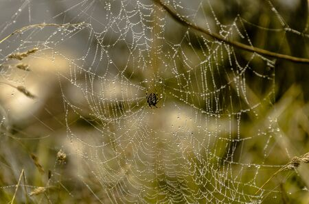 Spider on its dew covered web on an Autumn morning