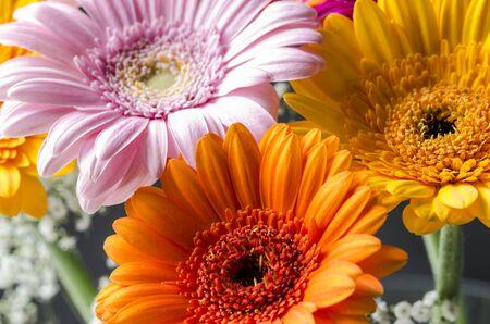 Gerbara flowers with Gypsophila backing.