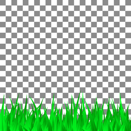 Green grass on transparent background template. Vector Illustration.