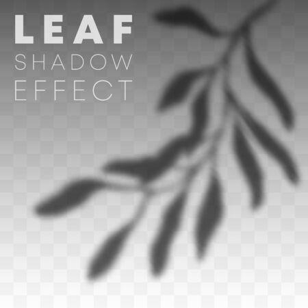 Leaf shadow overlay effect on transparent background. Vector illustration.