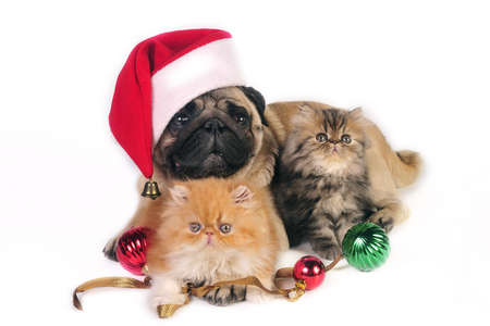 Pug dog wearing Santa hat with two little Persian kittens, surrounded by Christmas ornaments