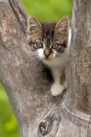 climbed: Cute little kitten climbed on a tree Stock Photo
