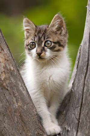 climbed: Cute little kitten climbed on a tree . Stock Photo