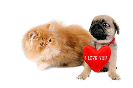 Cute little Pug puppy with sign I Love You and sweet Persian kitten . photo