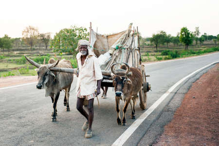 ORCHA INDIA  APRIL  25 2015: Unidentified man with ox cart on April 25 2015 in Orchha India.The ox chart is a common cargo transportation in India. Editorial