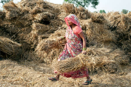 ORCHAINDIA   APRIL  23 2015: Unidentified Indian woman working on the field on April  23 2015 in Orchha Madhya Pradesh India. India ranks second worldwide in farm output.