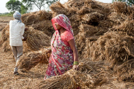 ORCHAINDIA   APRIL  23 2015: Unidentified Indian people working on the field on April  23 2015 in Orchha Madhya Pradesh India. India ranks second worldwide in farm output.