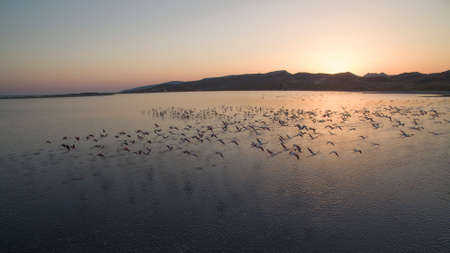 Flock of flamingos flying at sunset. Banco de Imagens