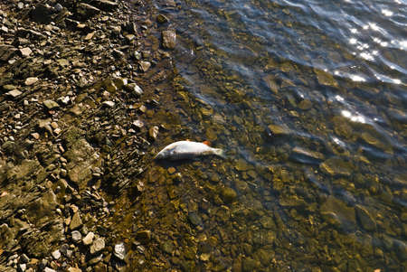 chub: Small chub on the boundary of land and water