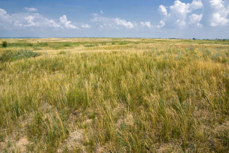 Covered with low grass steppe under a blue sky with clouds