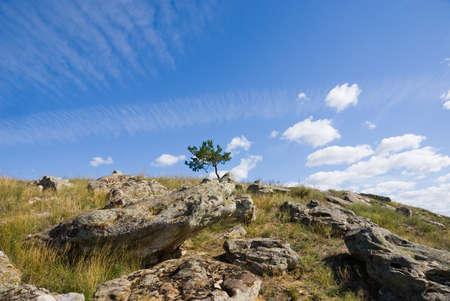 lone pine: Un �rbol de pino solitario en la cima de una colina con rocas