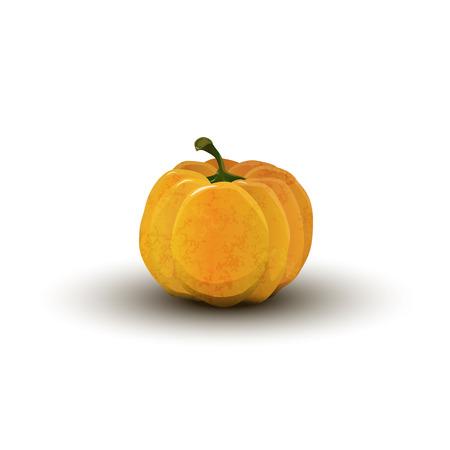 realistic pumpkin on Halloween Vector