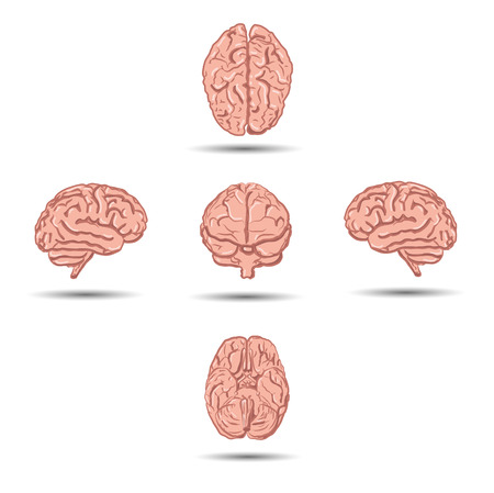 brain anatomy: Set of five human brains with shadow from different views