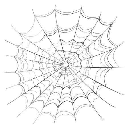 springe: Complicated scary spider web isolated on white
