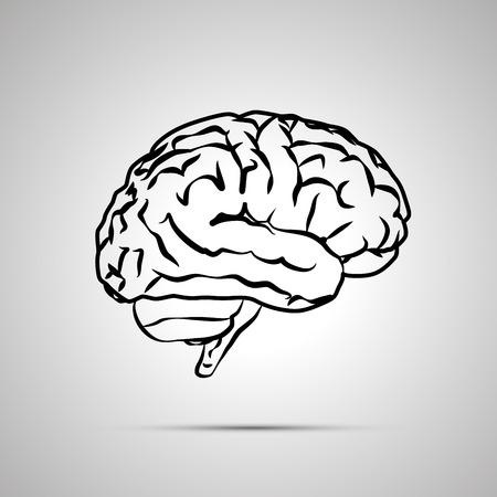 gyrus: Human brain, black vector icon with shadow Illustration