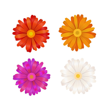 orange yellow: Set of colourful gerbera flowers isolated on white