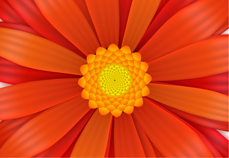 to bloom: Bright red gerbera flower in bloom, a4 size horizontal illustration