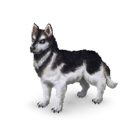 alaskan: Photorealistic cute husky dog isolated on white