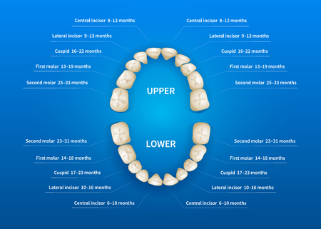 Children mouth with tooth numbering chart on blue background Vectores