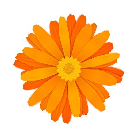 Bright colourful orange gerbera flower isolated on white