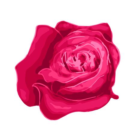 Bright beautiful rose bud isolated on white Illustration