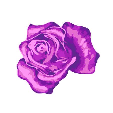 Bright gentle beautiful purple rose bud on white