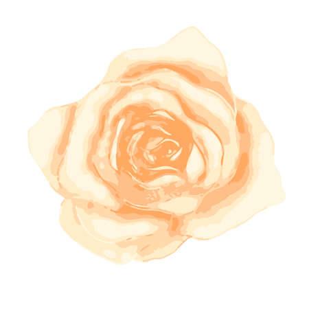 Bright gentle beautiful tea rose bud on white