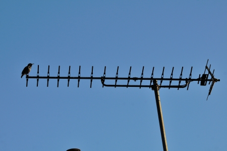 arial: A lone Starling perched on my television Arial