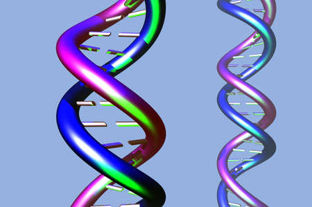 DNA molecule twisted chain model Stock Photo - 9284164