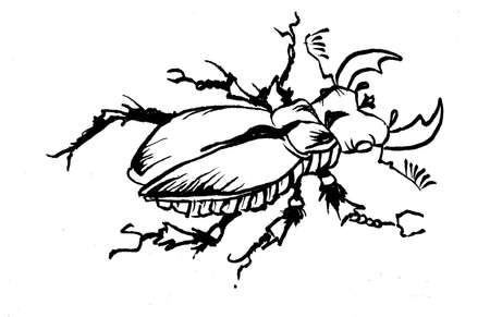 inked: stag-beetle inked on white Stock Photo