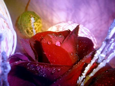 black rose drips and lantern photo