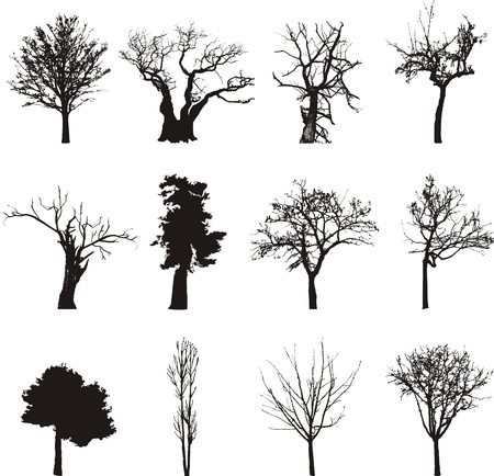 contours of trees
