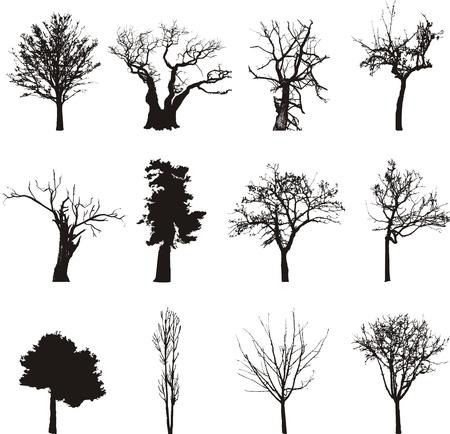 körvonalait a fák Illusztráció