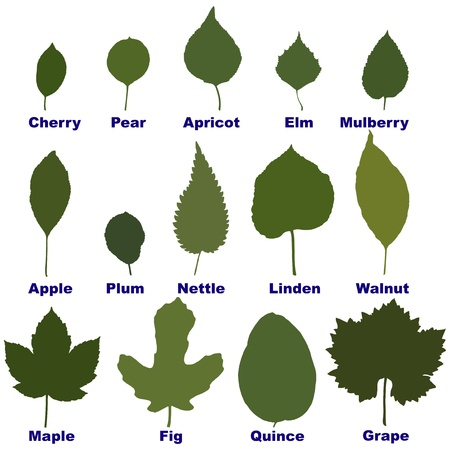 fig: leaves from trees and plants