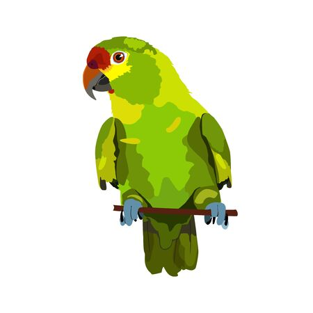 feathery: illustration of parrot on white background