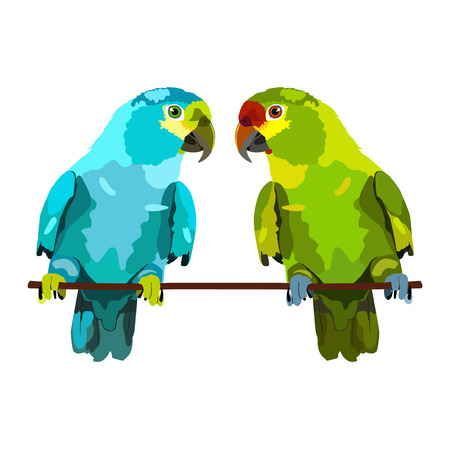the two parrots: illustration of two parrots on white background Illustration