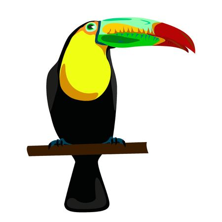 toucan: toucan illustration on white background