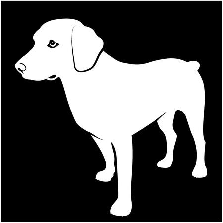 hunting dog: Black and white Illustration of hunting dog on dark background