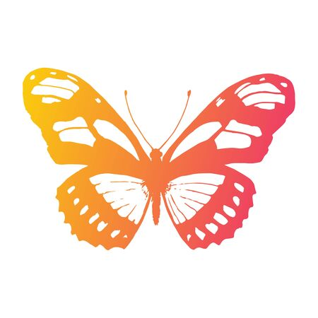 sunshine insect: Vector butterfly on white background. Design Element Illustration
