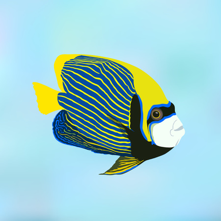 Emperor angelfish. Pomacanthus imperator. Vector illustration of coral fish.