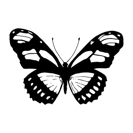 black and white: Vector butterfly. Black and white butterfly