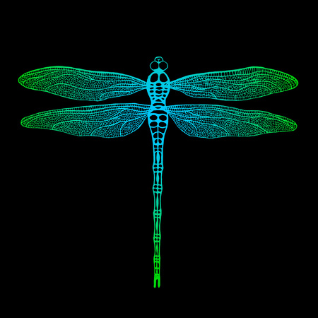 damselfly: Dragonfly. Vector dragonfly. Hand drawn vector damselfly.