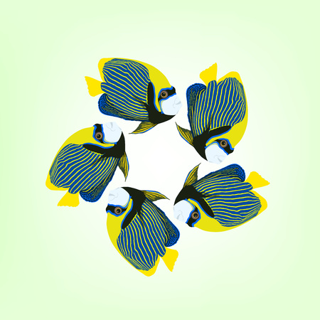 pomacanthus imperator: Vector illustration of five swimming fishes. Emperor angelfish. Pomacanthus imperator fish.